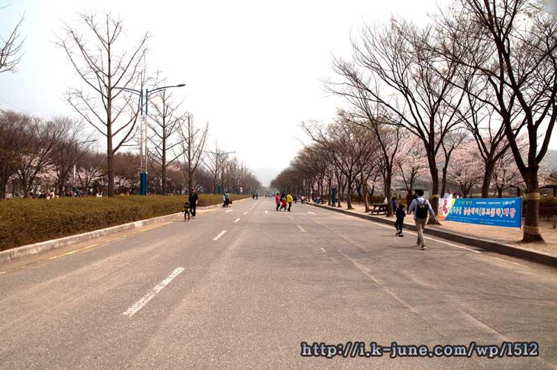 인천대공원 대로. 길가에 벚꽃이 피어 있다.