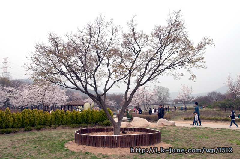 공원모습. 곳곳에 나무가 심어져 있다.