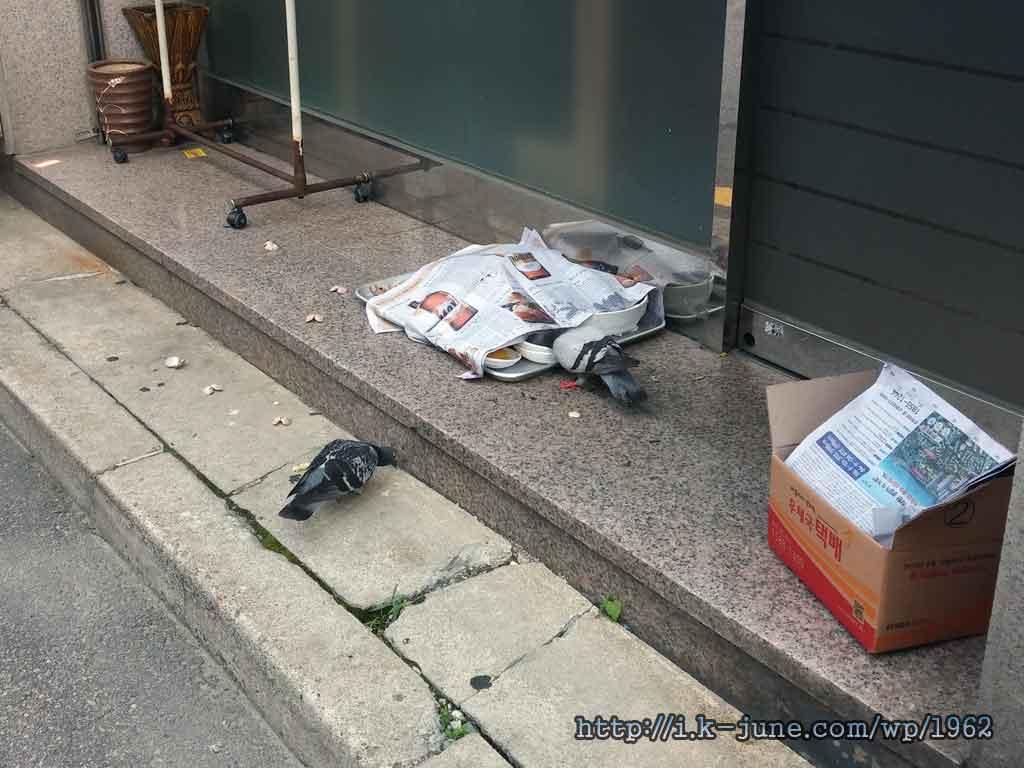 먹고 남은 그릇위에 신문지가 덮혀 있고, 주위에 비둘기가 서성이고 있다.