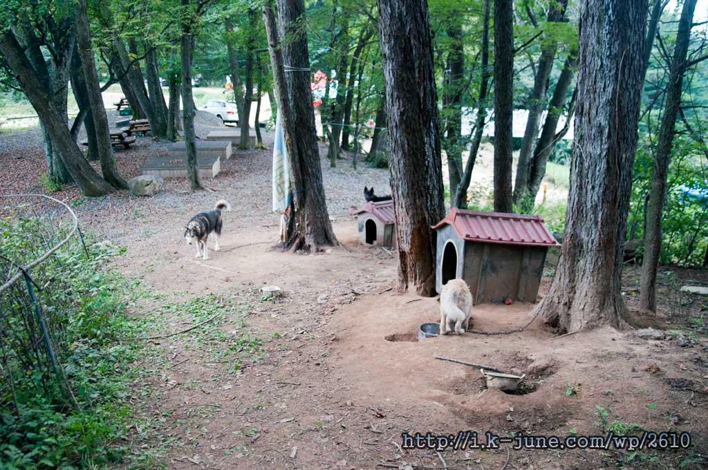 숲속의 개집과 개 두마리