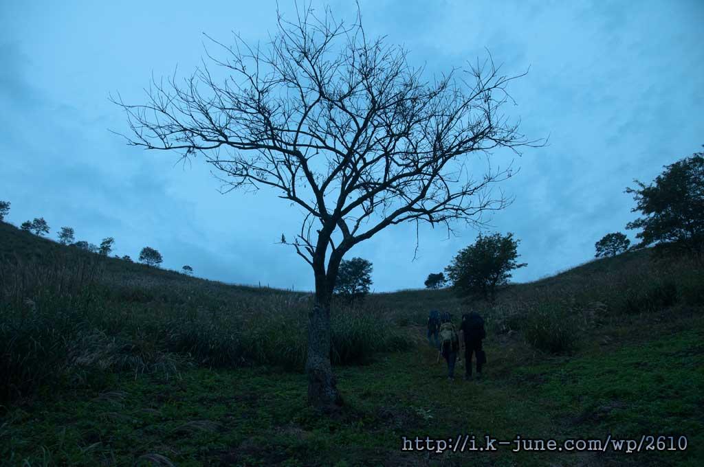 가운데 가지만 남은 앙상한 나무