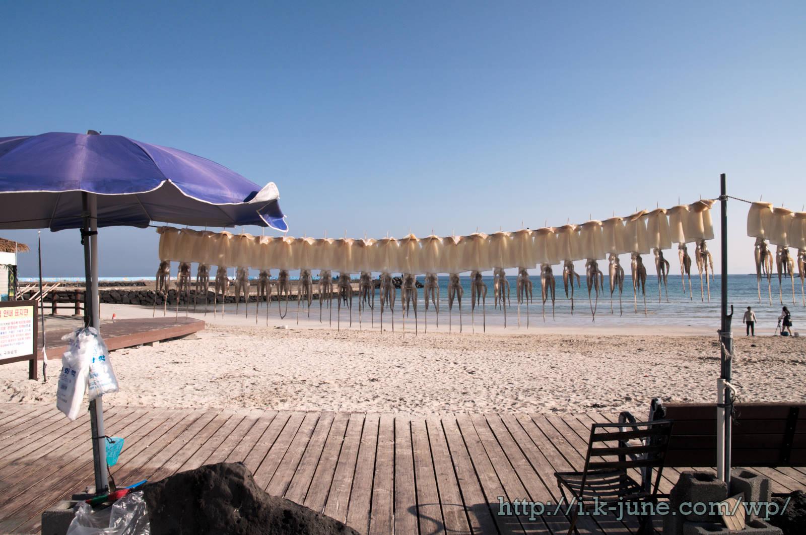바닷가 모래사장에 오징어 수십마리가 널려 있다.