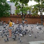 타페게이트(ประตูท่าแพ,Tha Pae Gate)앞 광장에서 맥주마시기 좋아 보였는데 비둘기가 너무 많았다.